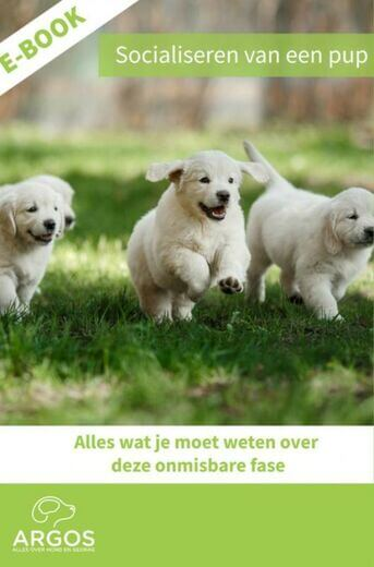 Socialiseren van een pup (e-book)